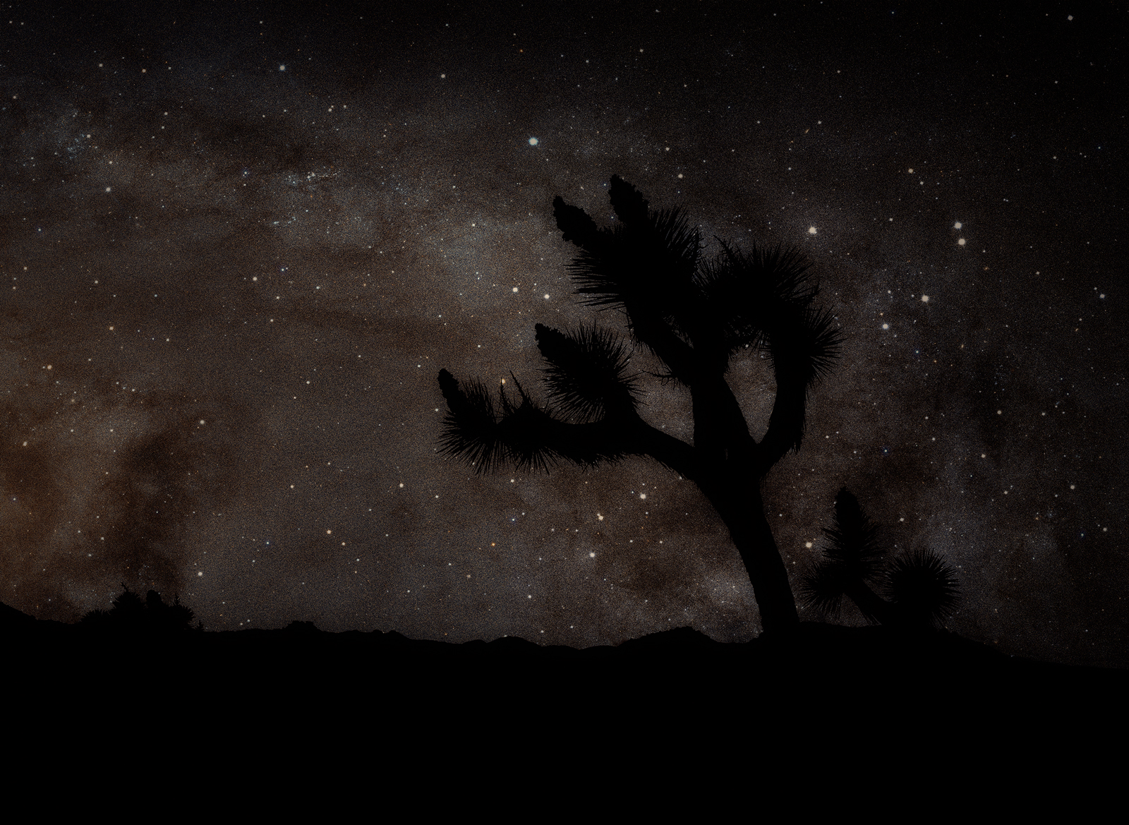 Milky Way Over Joshua Tree © Glen Wexler