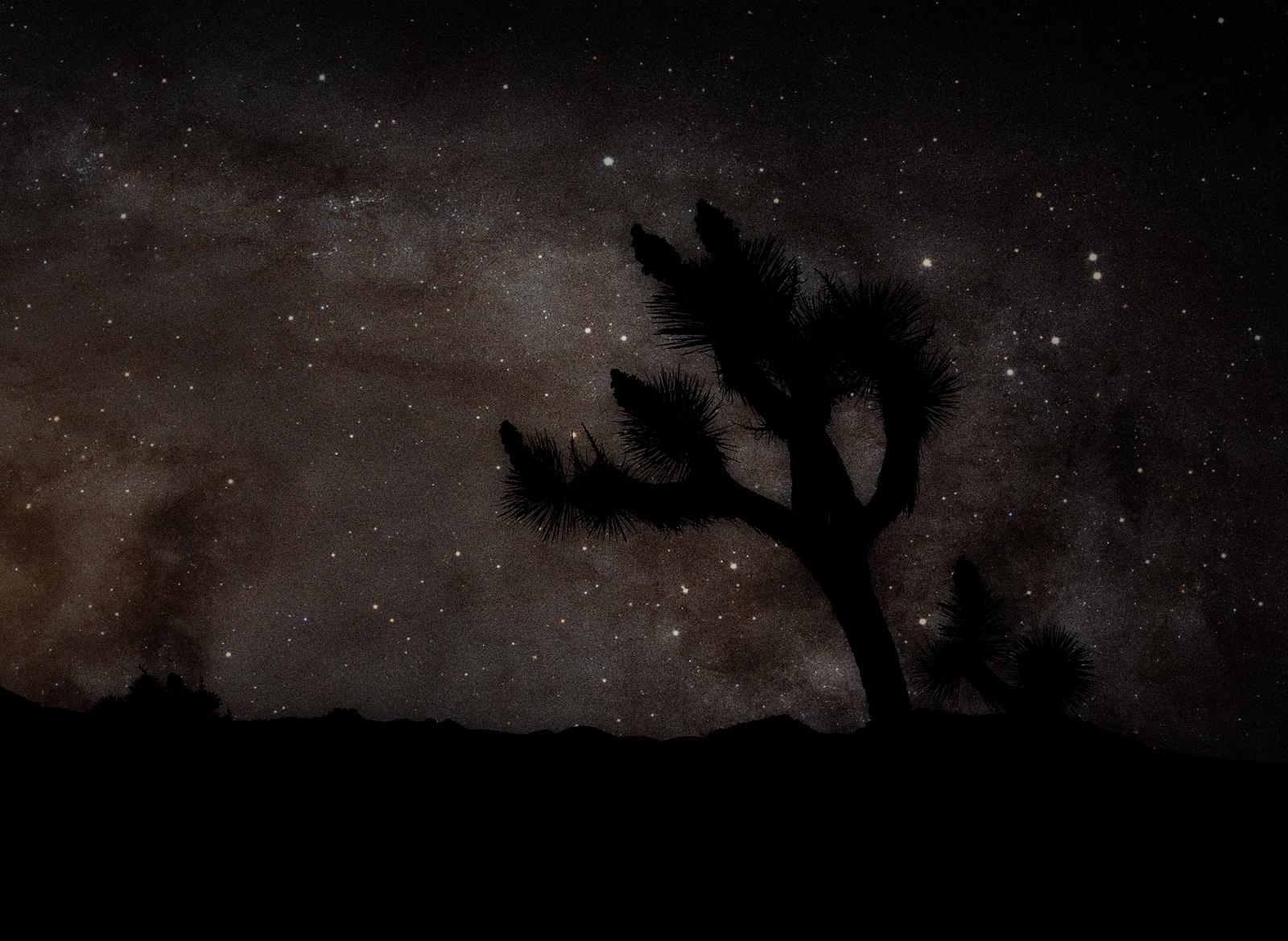 Milky Way Over Joshua Tree © Glen Wexler