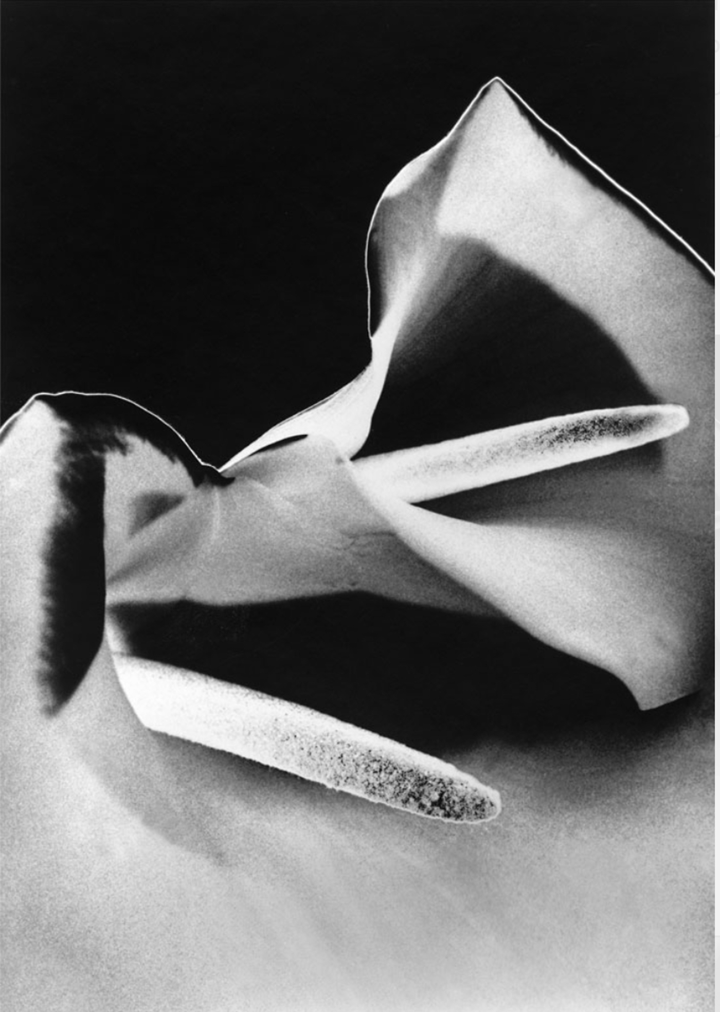 Solar Lilies © Marilyn Sanders