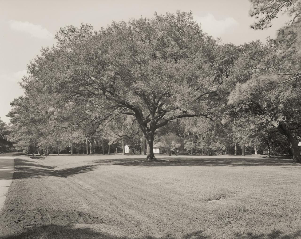 038 Oak Tree On Del Monte FLAT