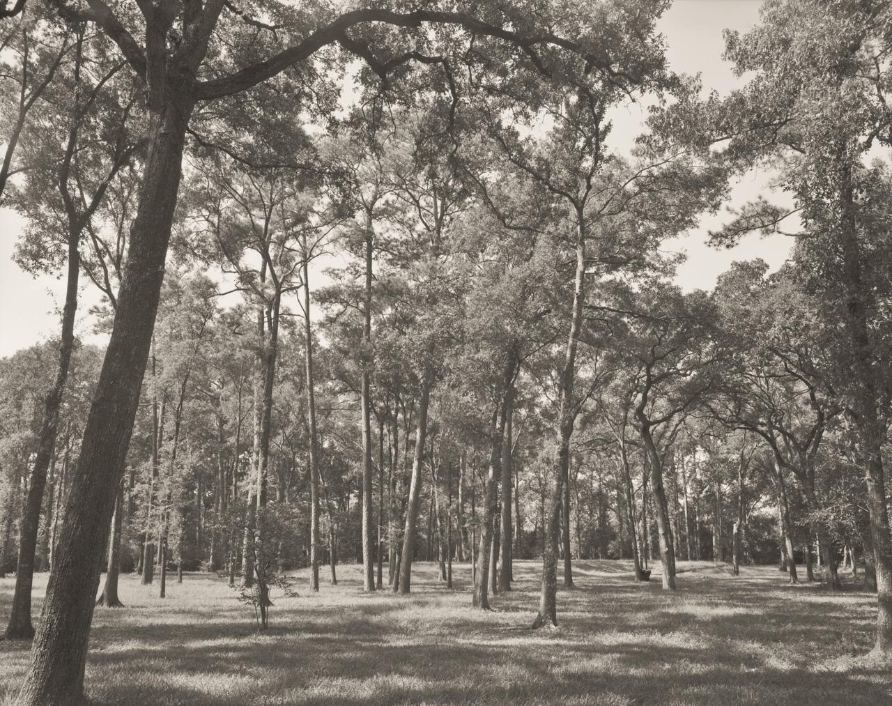 040 River oaks I FLAT