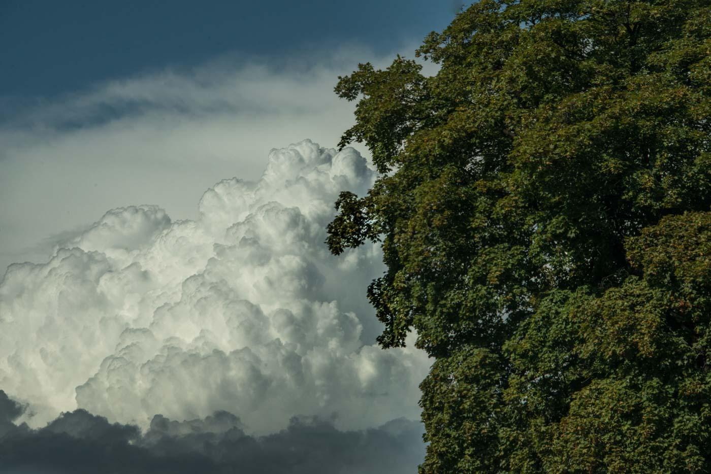 Cloud and Tree ,Smithfield, Utah 2017 © Robert Welkie