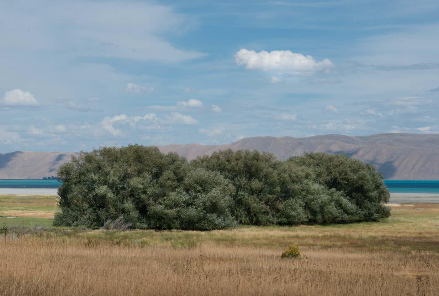 Cloud Above Trees Near Garden City, Utah 2016 © Robert Welkie