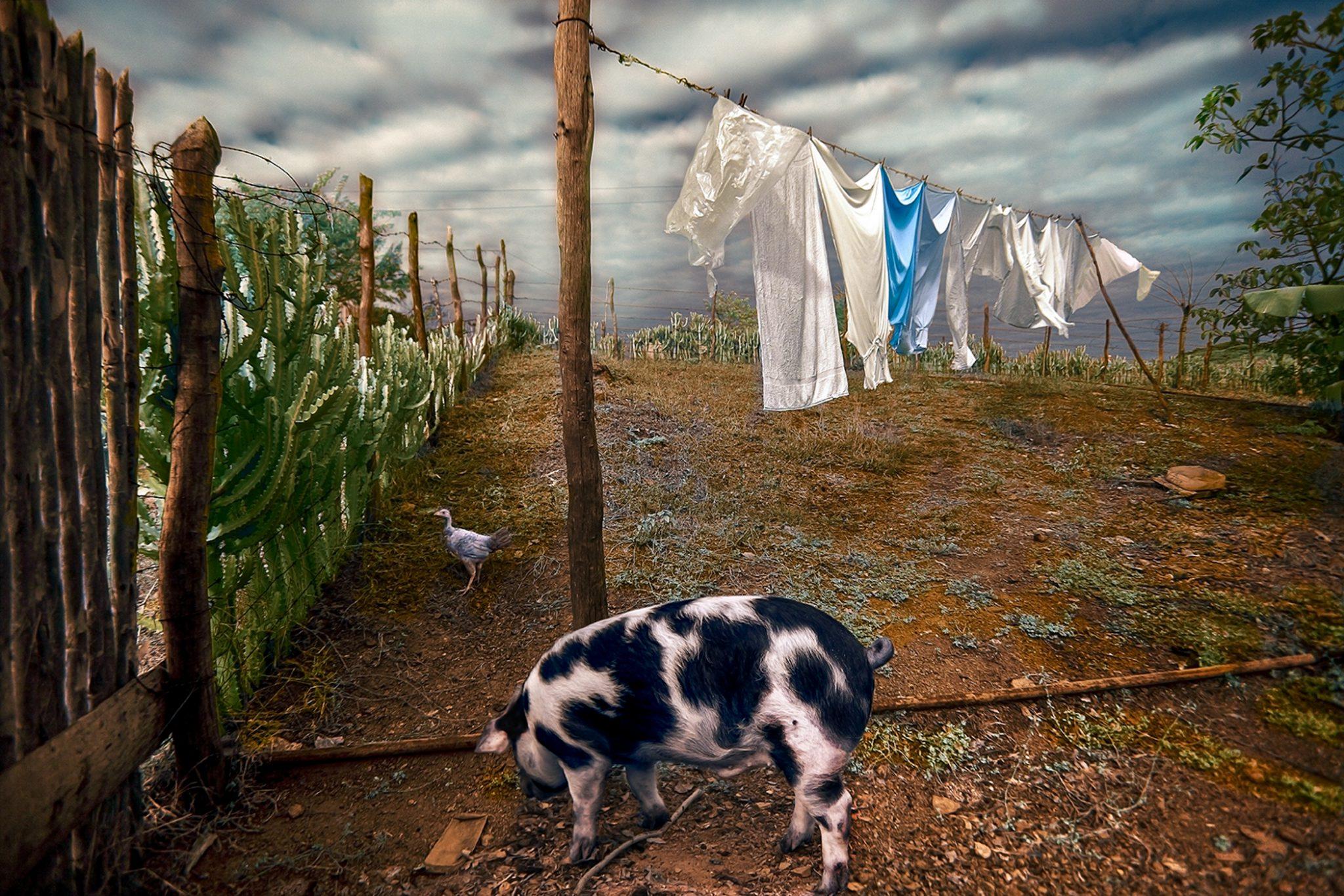 Pig and Clothesline  2/15 © EK Waller