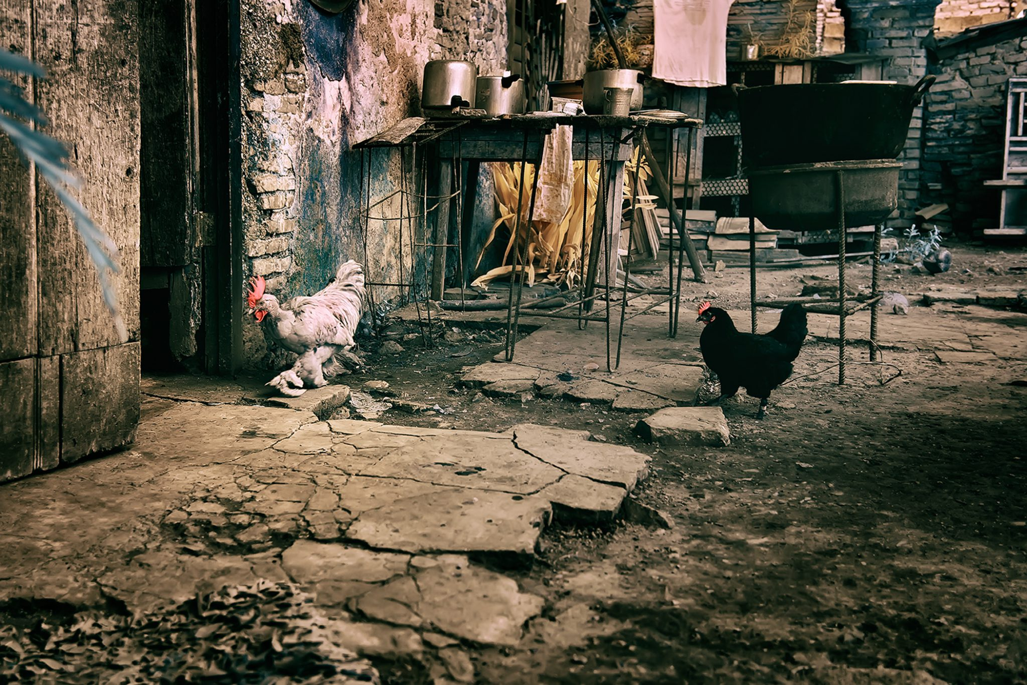 Roosters In the Kitchen 2/15 © EK Waller