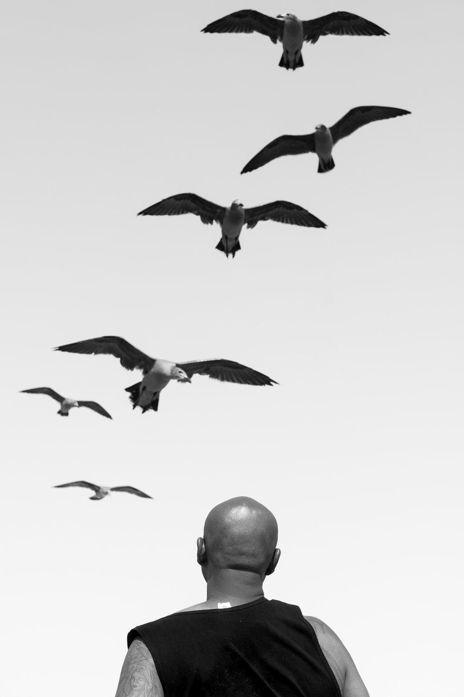 The Birds © Brandon Kusher