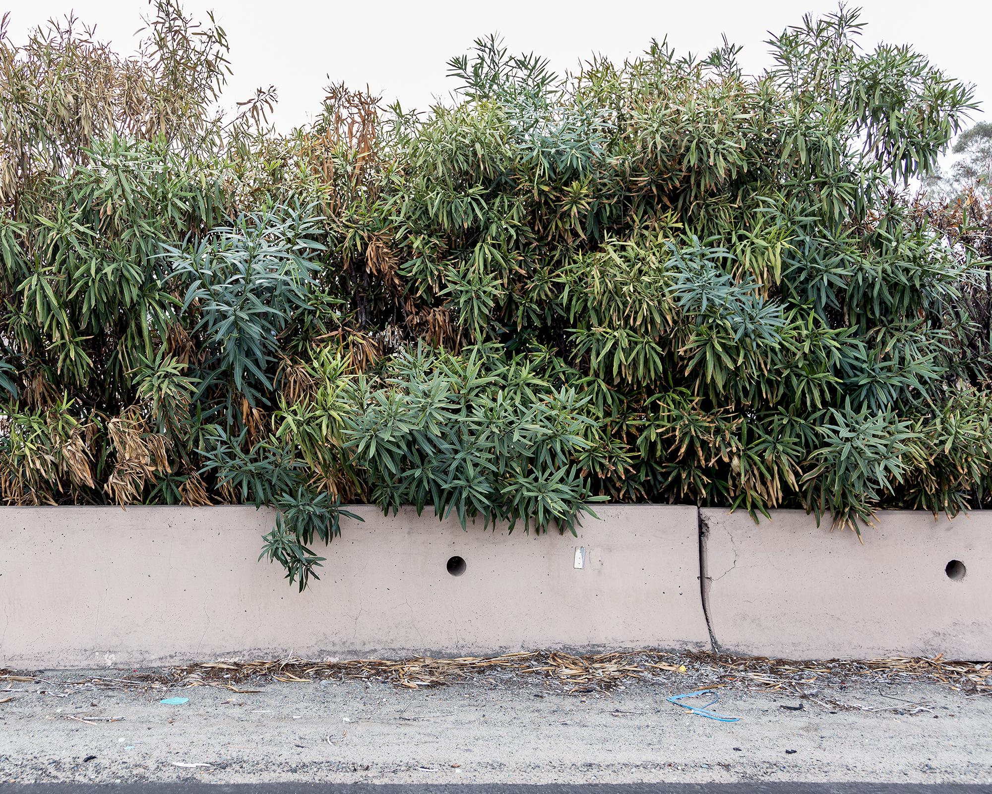 Camouflage © Douglas Stockdale