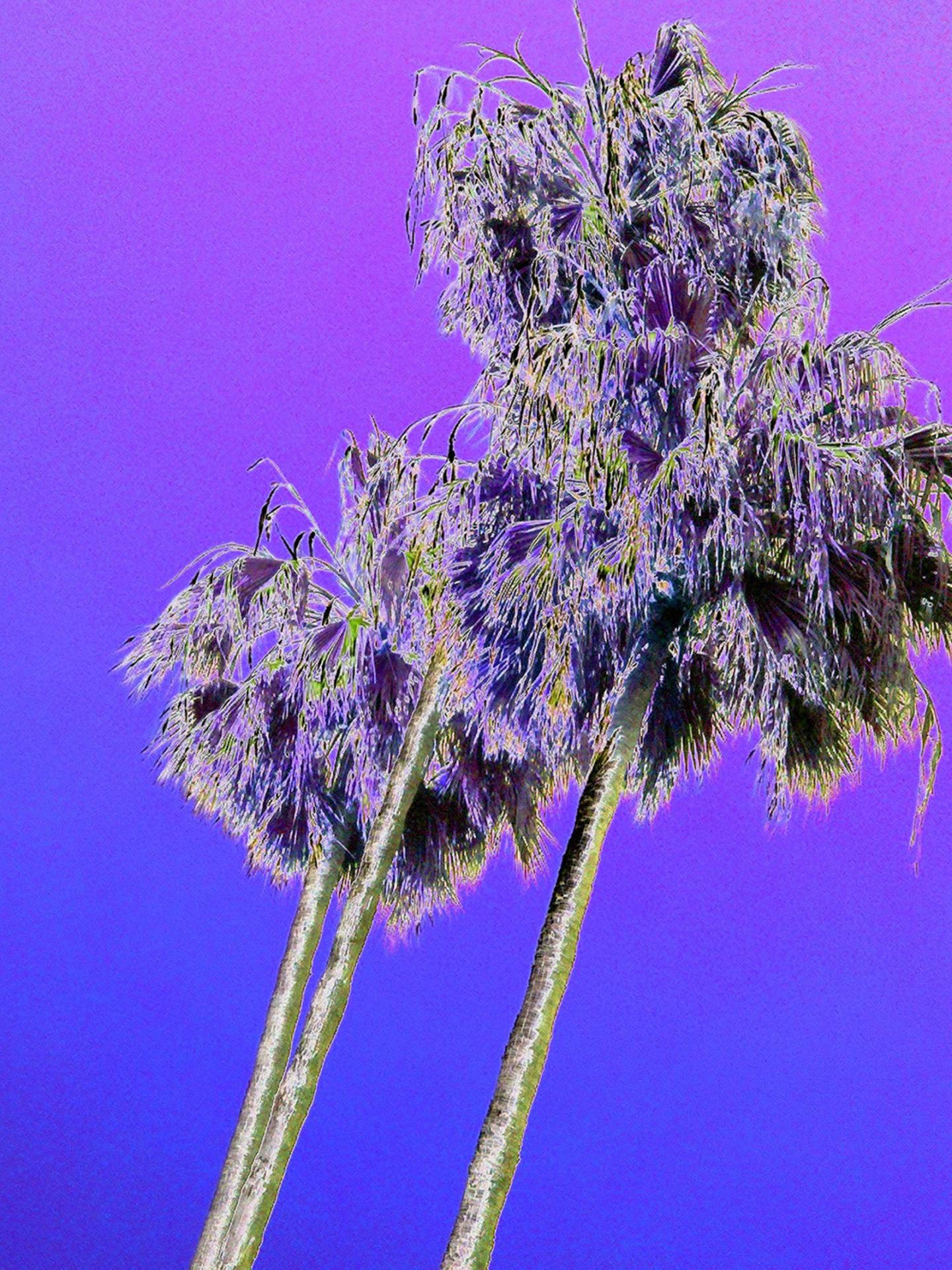 Purple Palms ©Haldeman