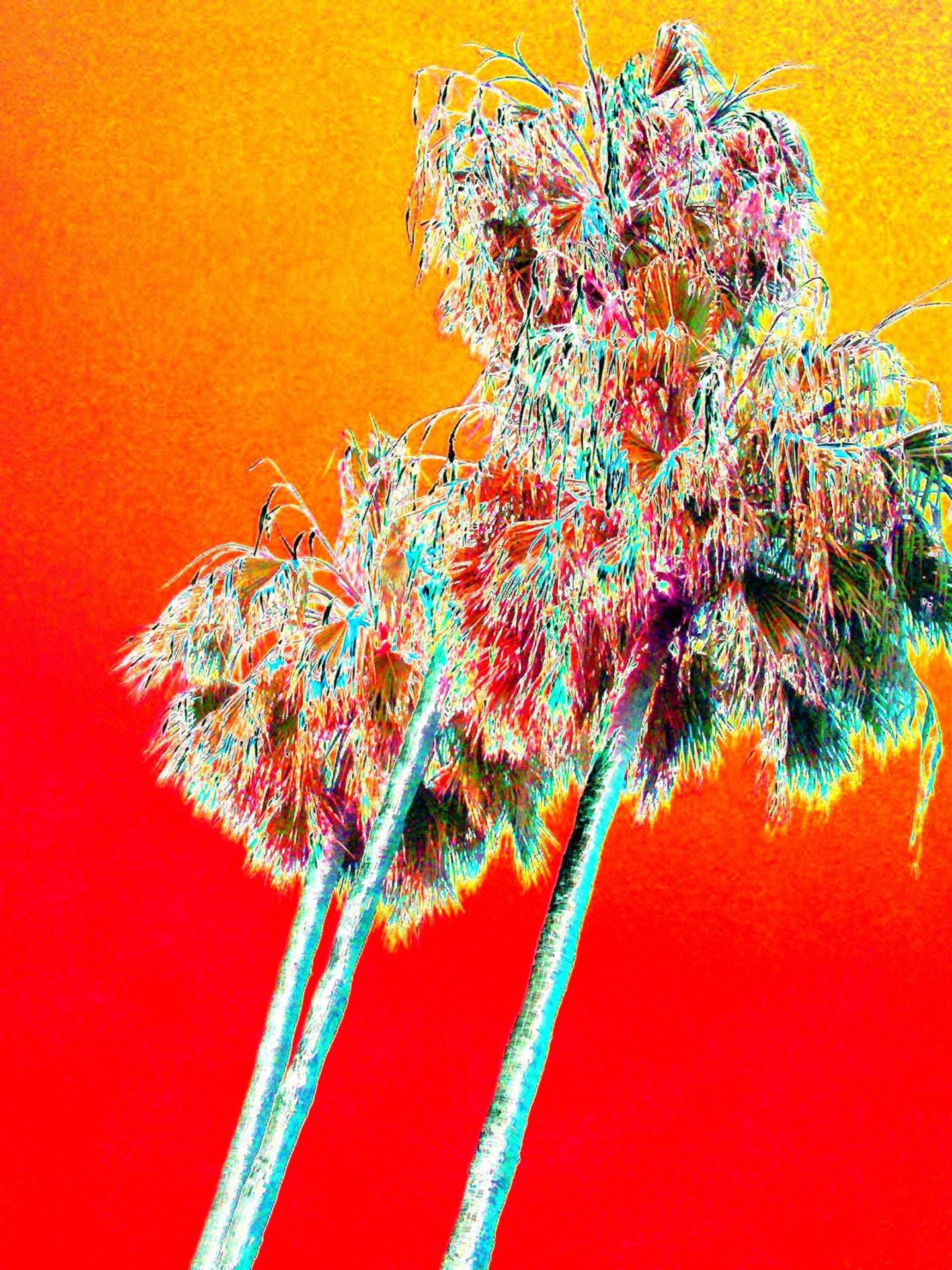 Red Palms ©Haldeman